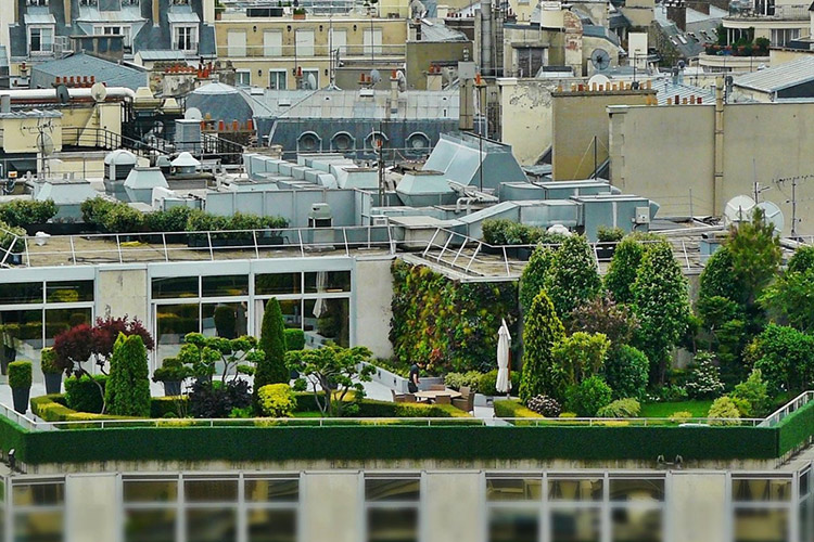 ROOF GARDENS: HOW GREEN ROOFS ARE INSERTING ALL OVER THE  WORLD
